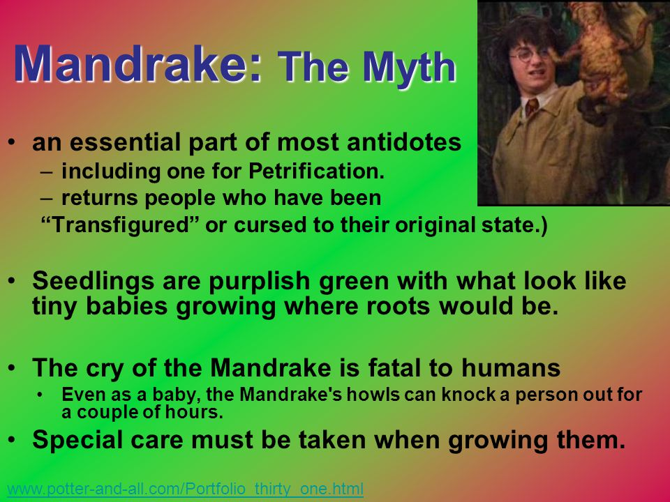 Mandrake: The Myth an essential part of most antidotes