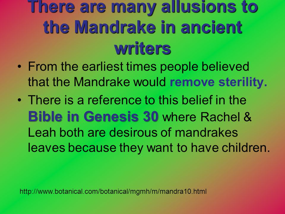 There are many allusions to the Mandrake in ancient writers