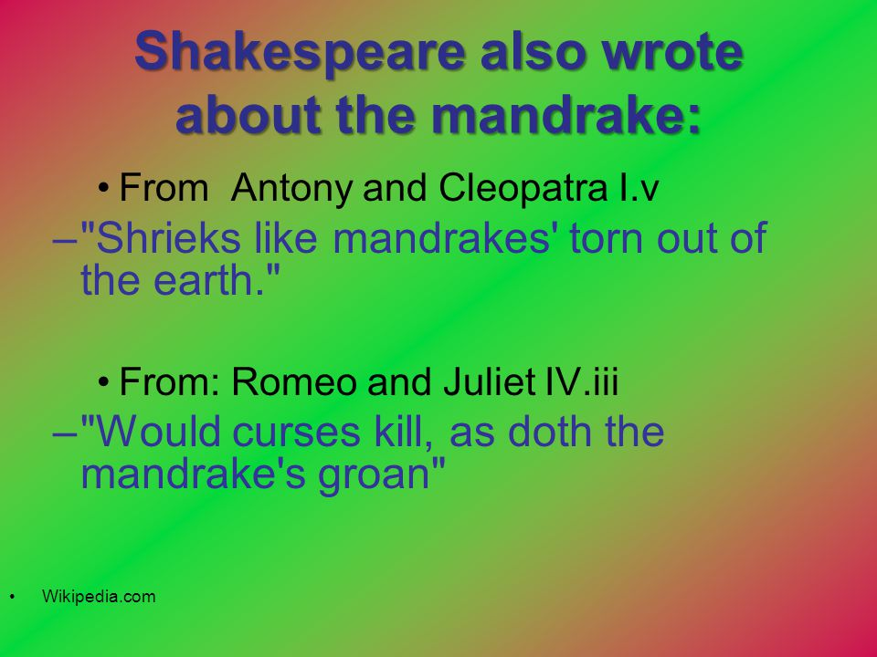 Shakespeare also wrote about the mandrake: