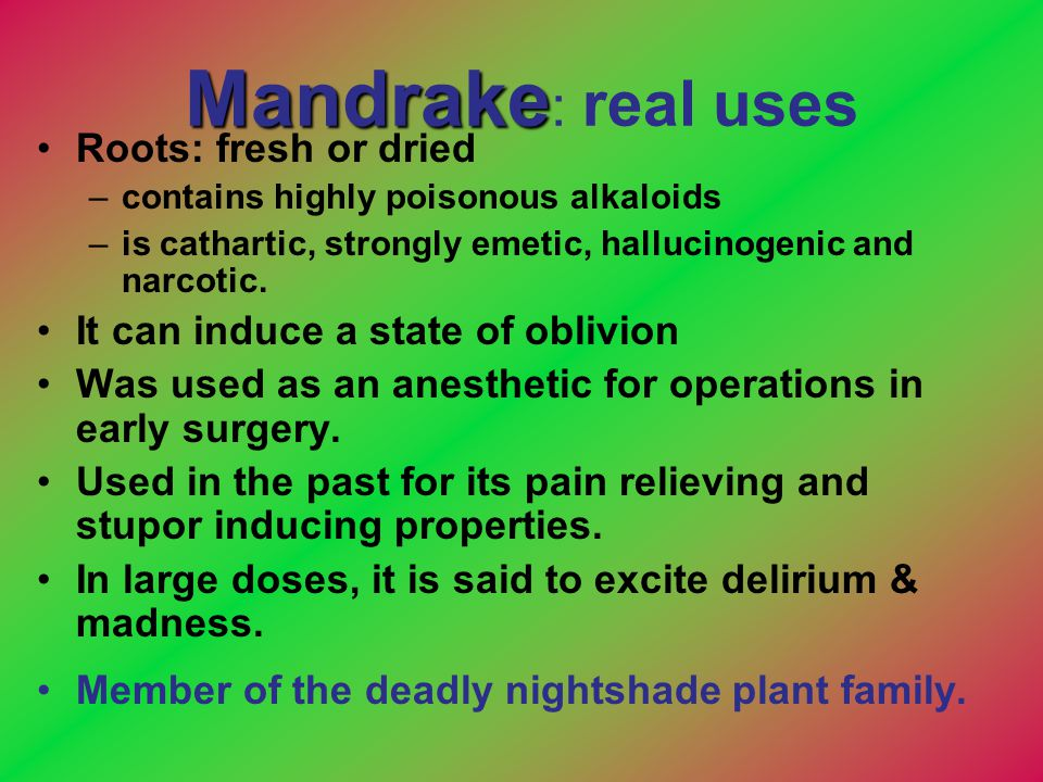 Mandrake: real uses Roots: fresh or dried
