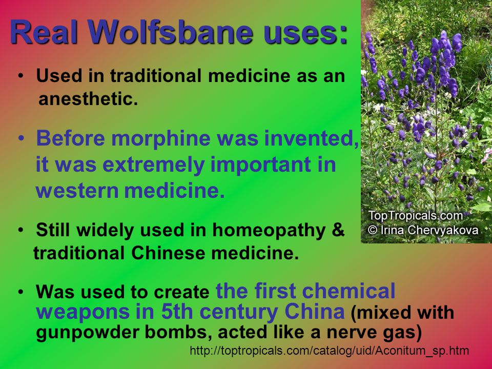 Real Wolfsbane uses: Before morphine was invented,