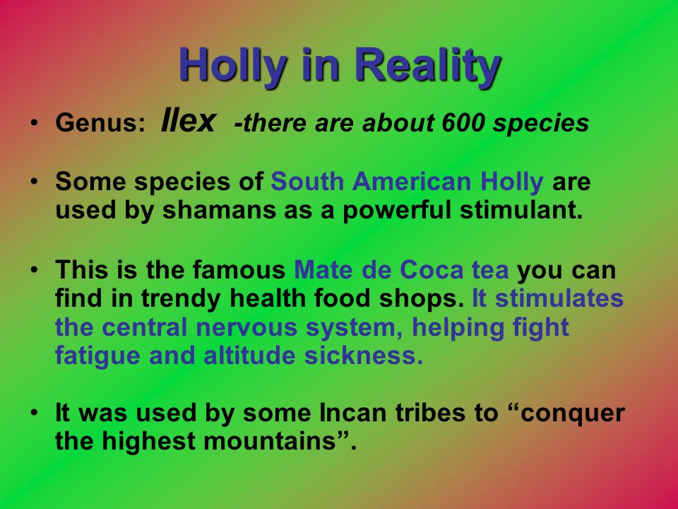 Holly in Reality Genus: Ilex -there are about 600 species