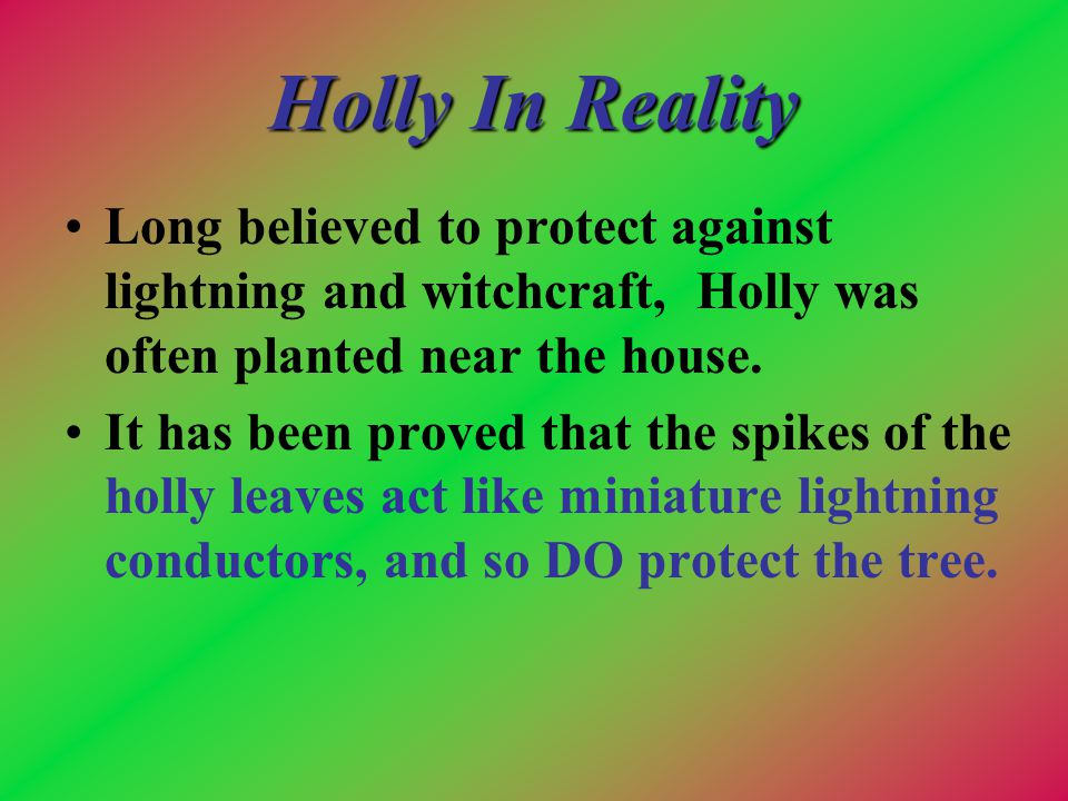 Holly In Reality Long believed to protect against lightning and witchcraft, Holly was often planted near the house.