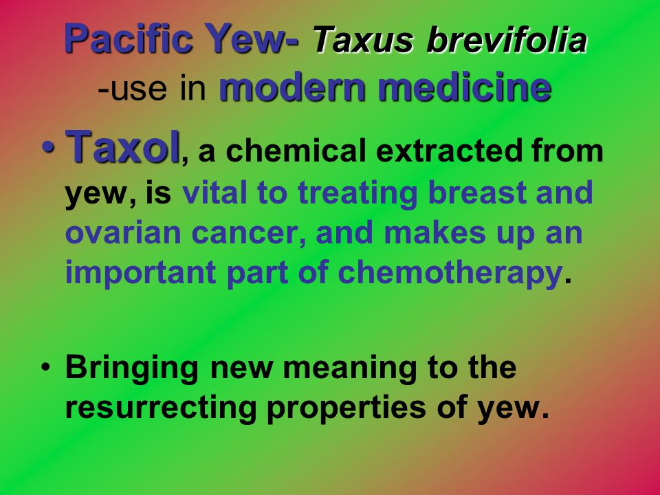 Pacific Yew- Taxus brevifolia -use in modern medicine