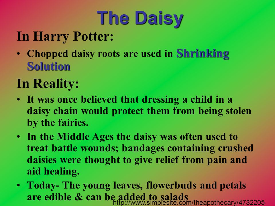The Daisy In Harry Potter: In Reality:
