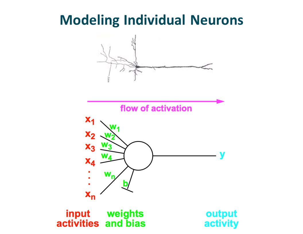 Modeling Individual Neurons