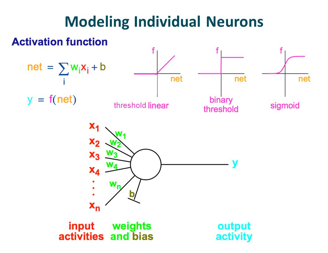 Modeling Individual Neurons