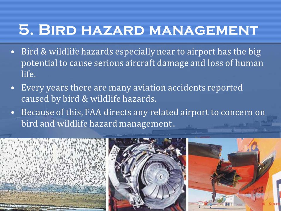 5. Bird hazard management