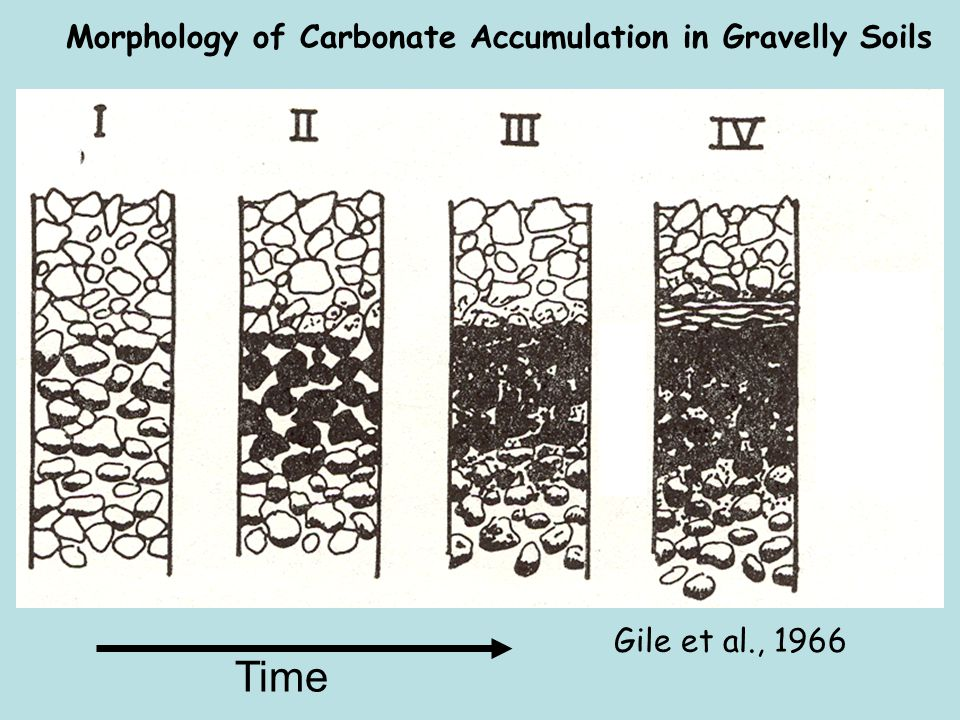 Time Morphology of Carbonate Accumulation in Gravelly Soils