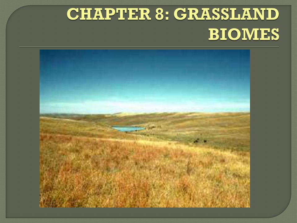 CHAPTER 8: GRASSLAND BIOMES