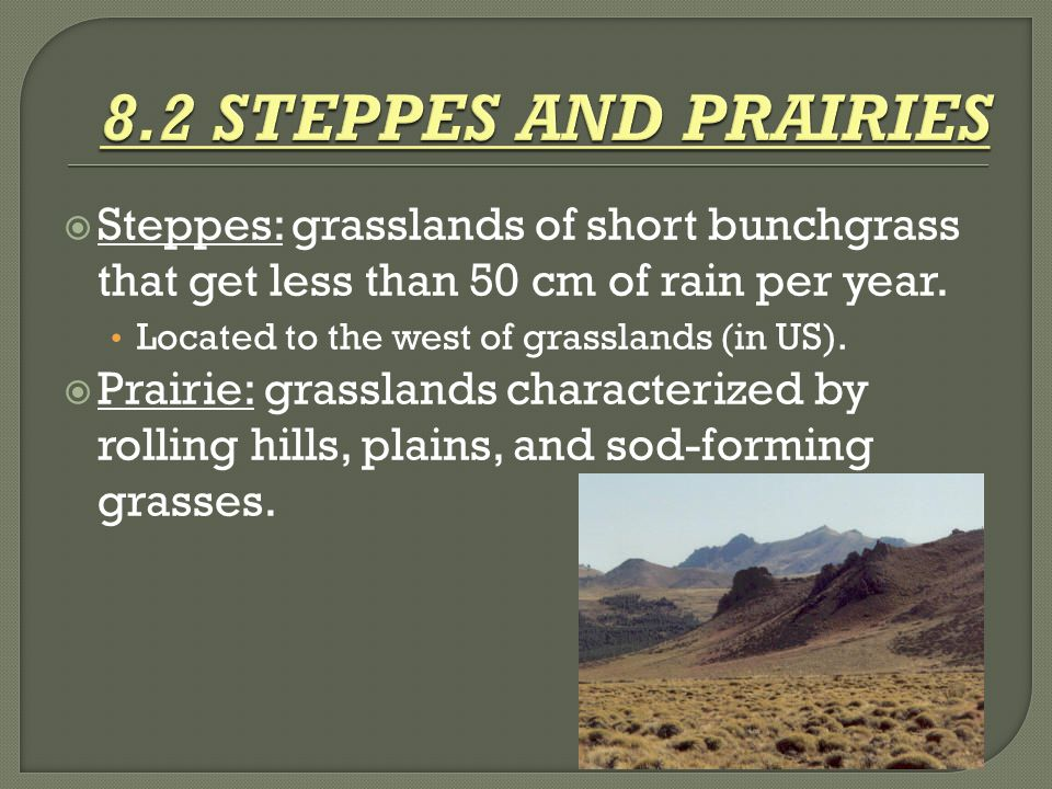 8.2 STEPPES AND PRAIRIES Steppes: grasslands of short bunchgrass that get less than 50 cm of rain per year.