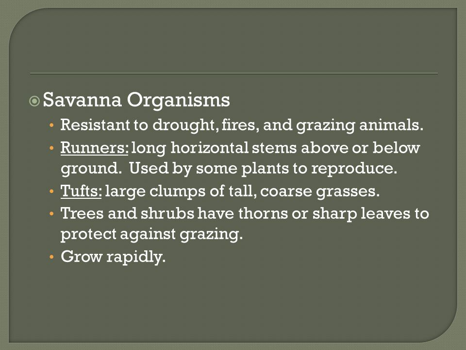 Savanna Organisms Resistant to drought, fires, and grazing animals.