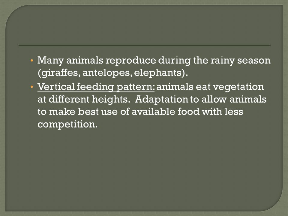 Many animals reproduce during the rainy season (giraffes, antelopes, elephants).