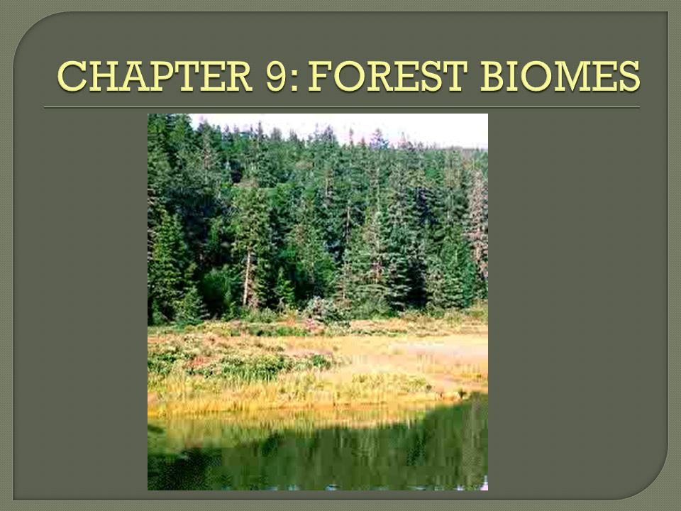 CHAPTER 9: FOREST BIOMES