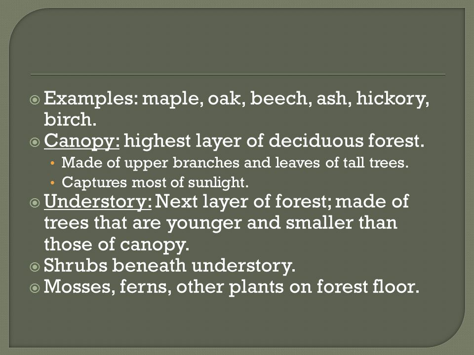 Examples: maple, oak, beech, ash, hickory, birch.