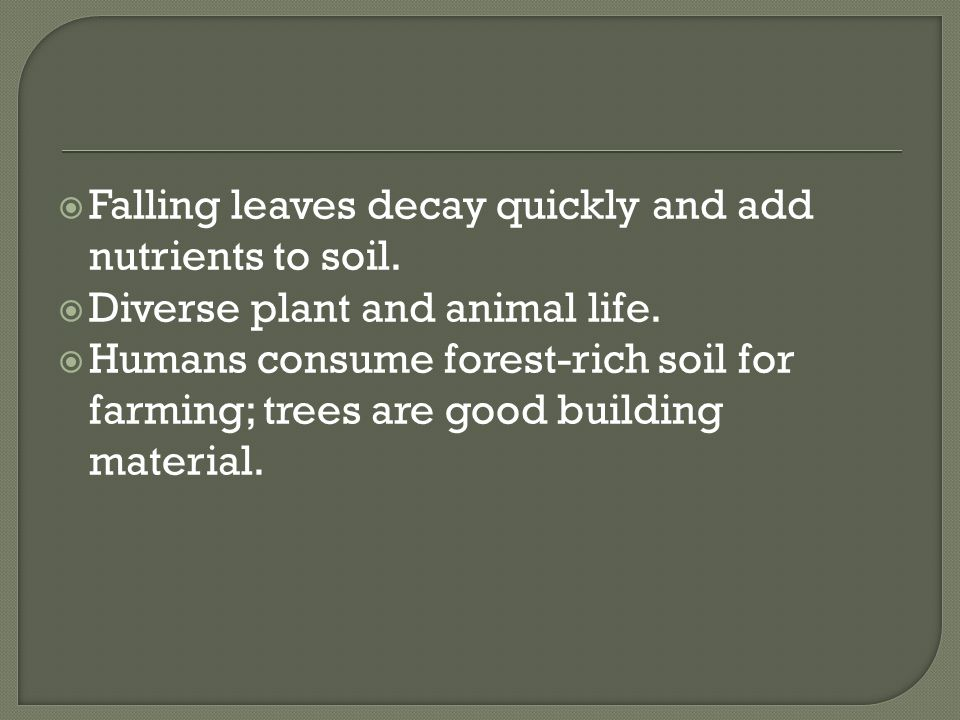 Falling leaves decay quickly and add nutrients to soil.