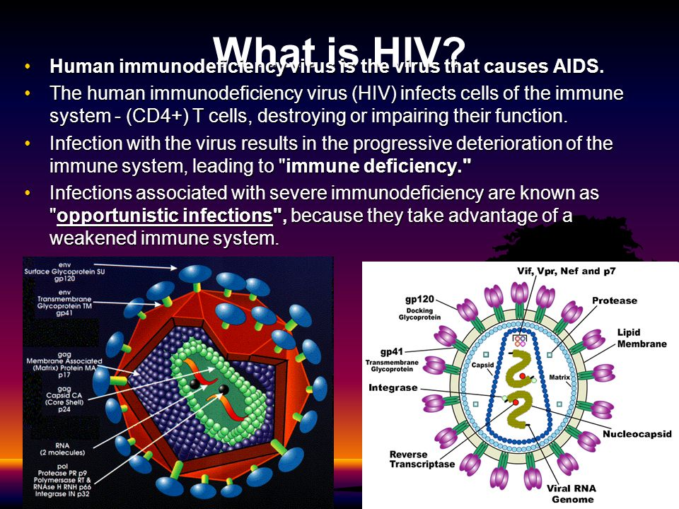 What is HIV Human immunodeficiency virus is the virus that causes AIDS.