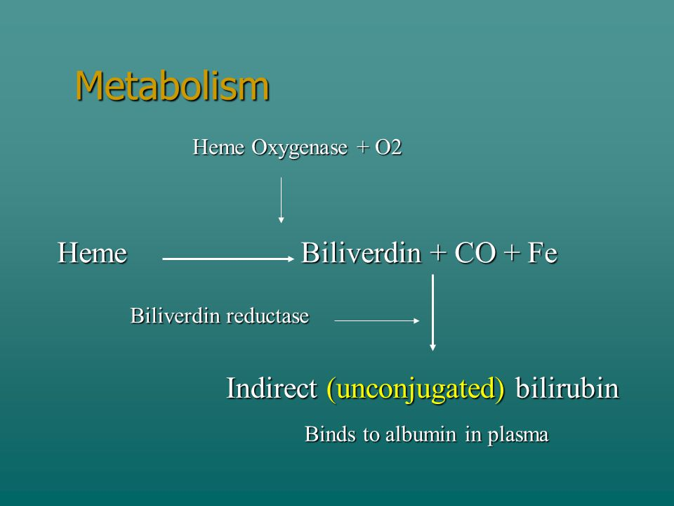 Metabolism Heme Biliverdin + CO + Fe Indirect (unconjugated) bilirubin
