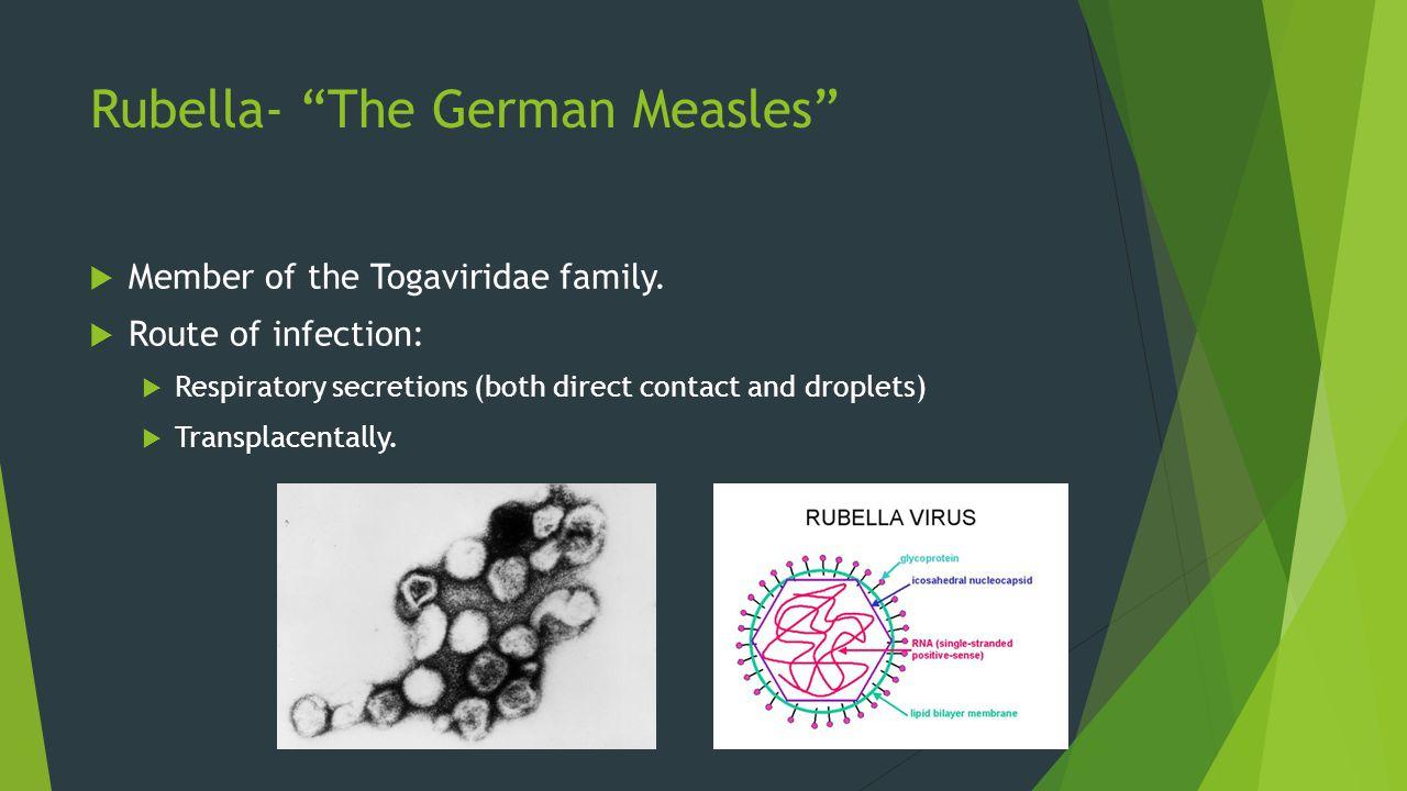 Rubella- The German Measles