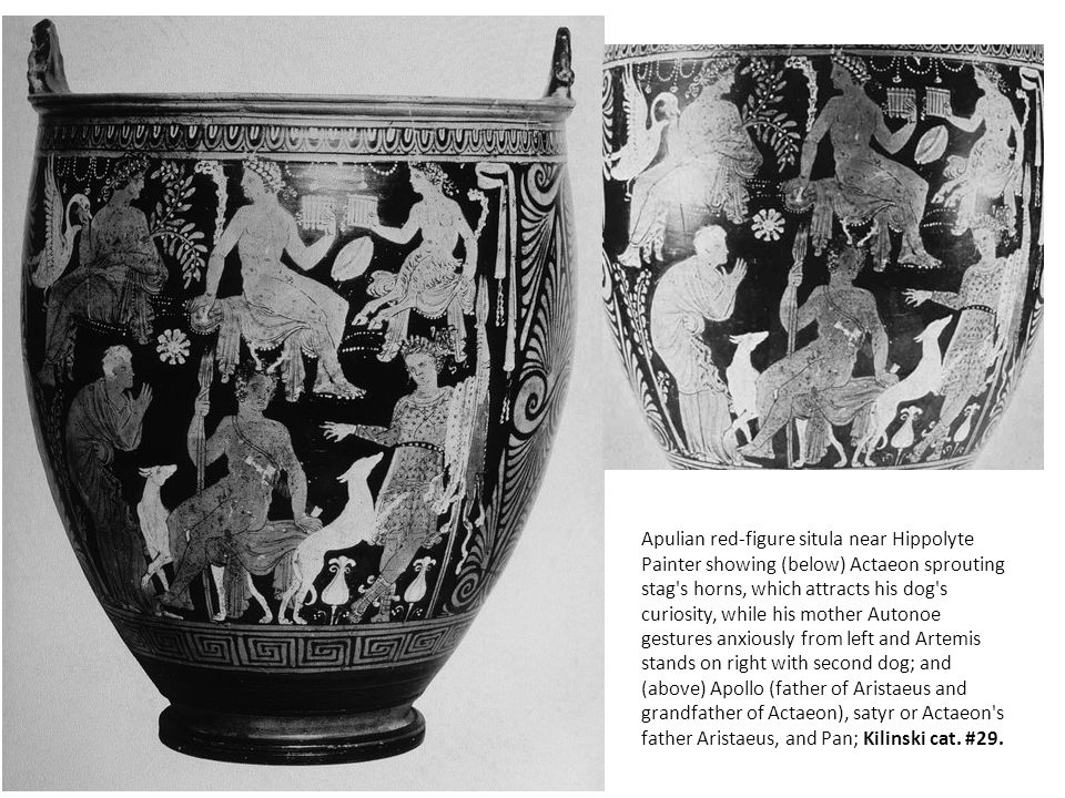 Apulian red-figure situla near Hippolyte Painter showing (below) Actaeon sprouting stag s horns, which attracts his dog s curiosity, while his mother Autonoe gestures anxiously from left and Artemis stands on right with second dog; and (above) Apollo (father of Aristaeus and grandfather of Actaeon), satyr or Actaeon s father Aristaeus, and Pan; Kilinski cat.