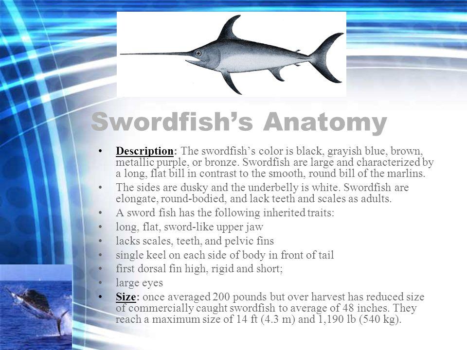 Swordfish's Anatomy