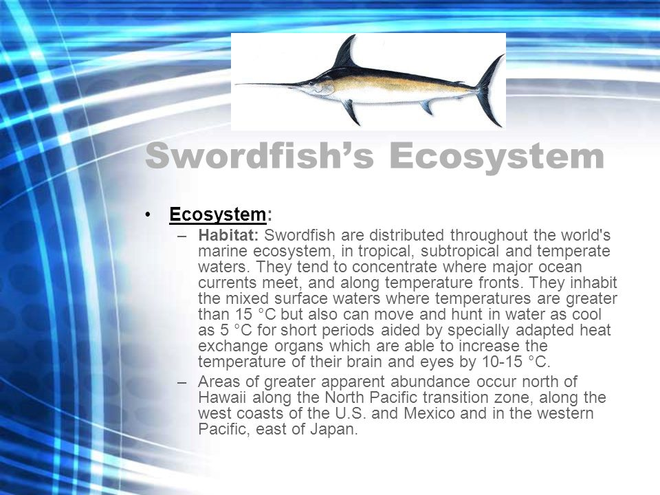 Swordfish's Ecosystem