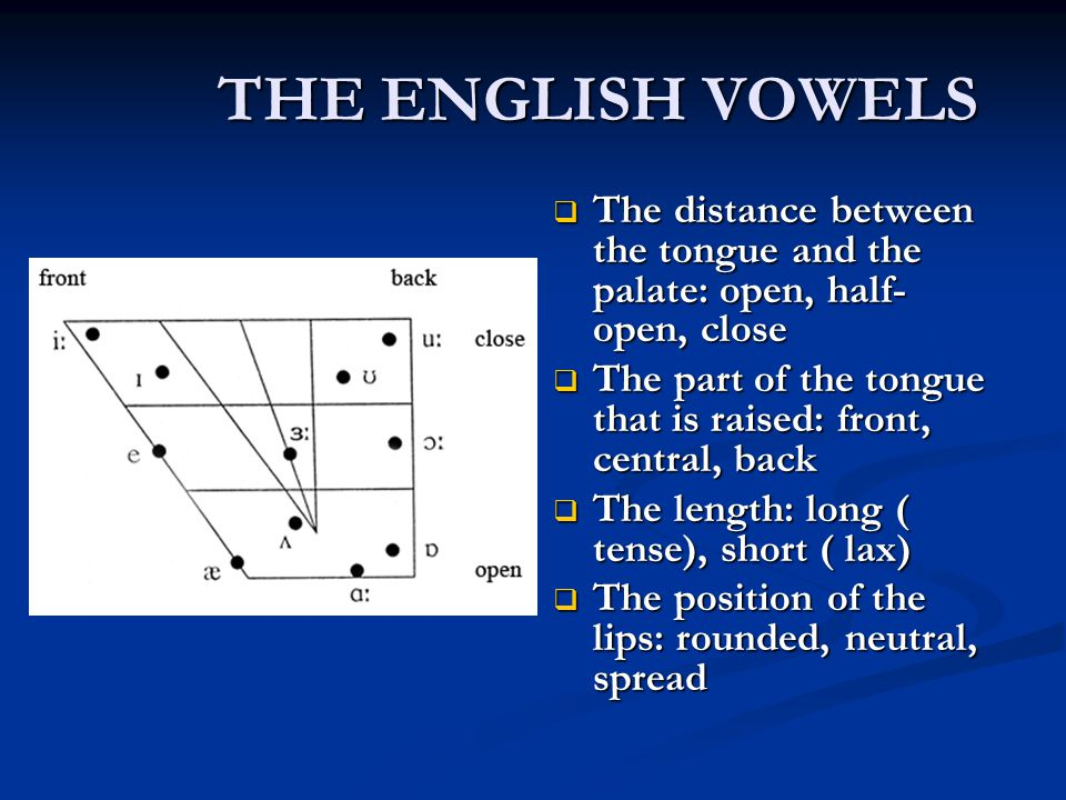 THE ENGLISH VOWELS The distance between the tongue and the palate: open, half-open, close.