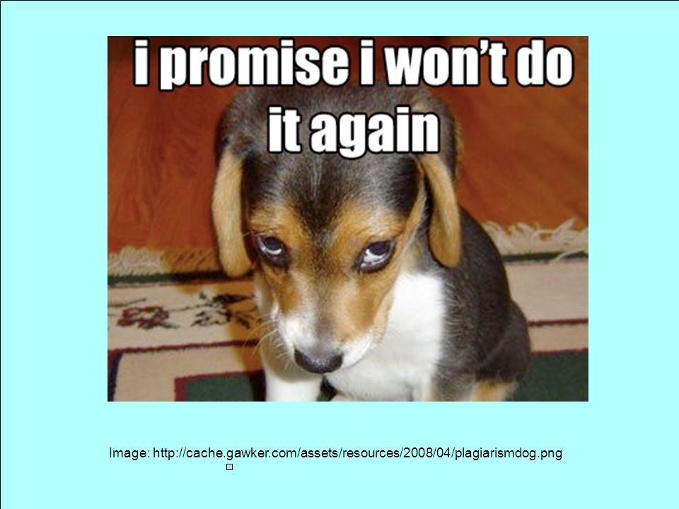 Image: http://cache.gawker.com/assets/resources/2008/04/plagiarismdog.png
