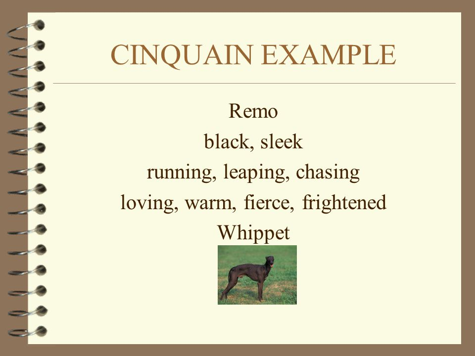 CINQUAIN EXAMPLE Remo black, sleek running, leaping, chasing loving, warm, fierce, frightened Whippet