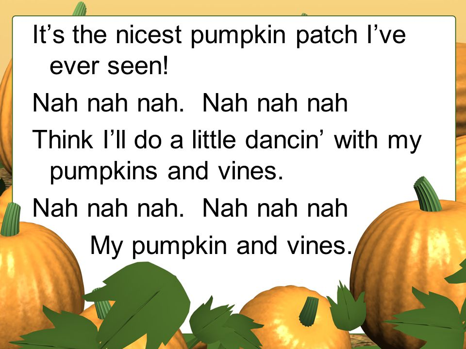 It's the nicest pumpkin patch I've ever seen!