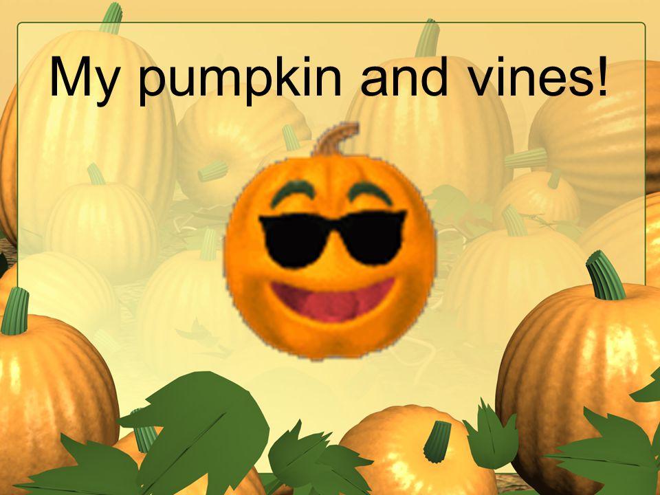 My pumpkin and vines!