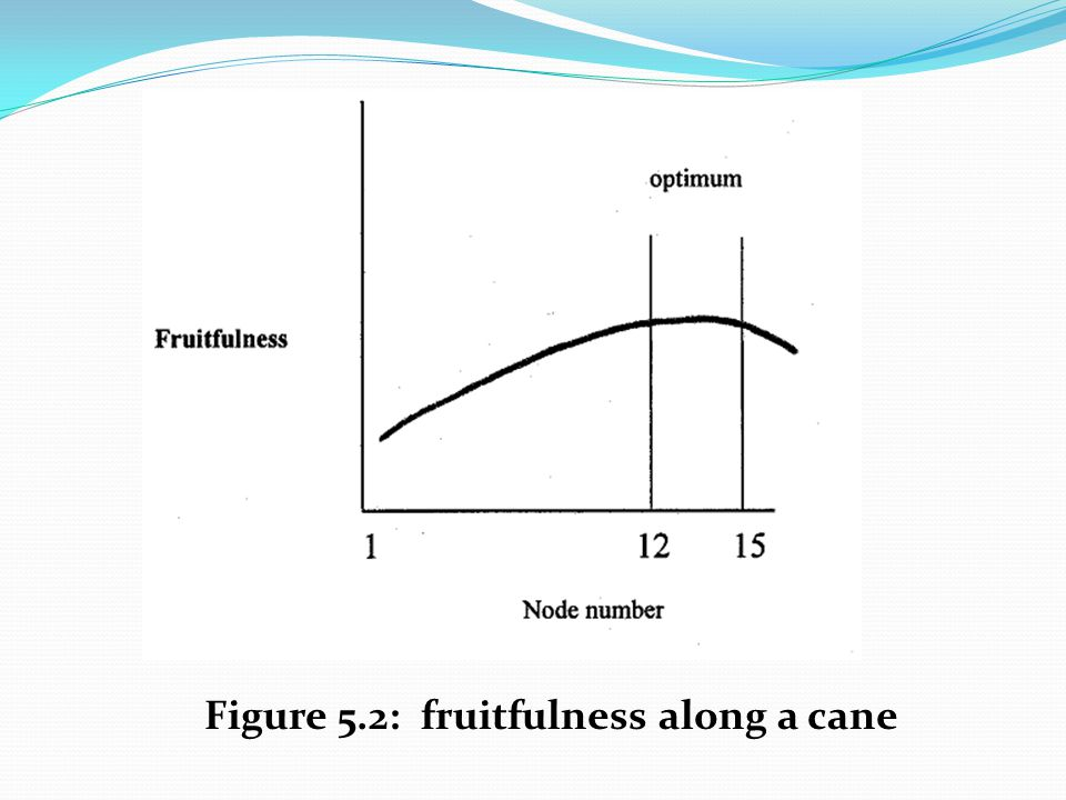 Figure 5.2: fruitfulness along a cane