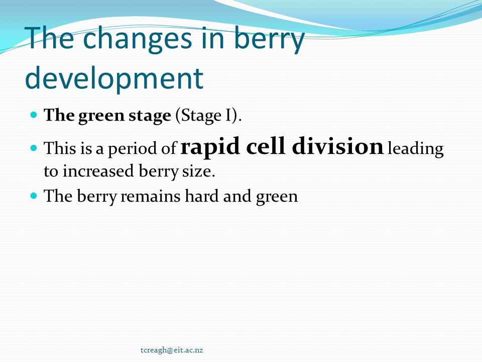 The changes in berry development