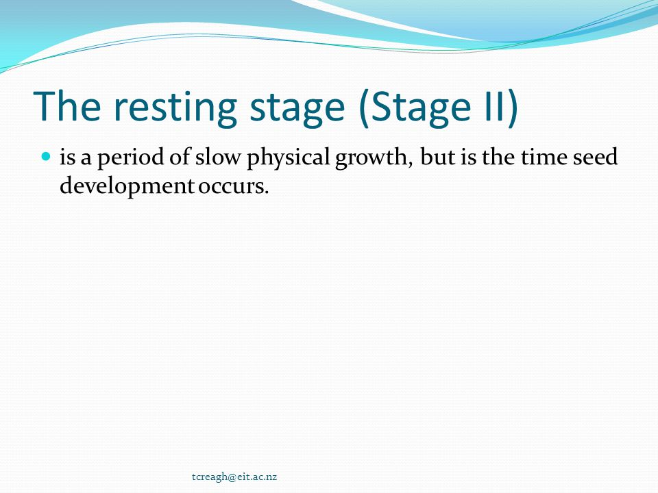The resting stage (Stage II)