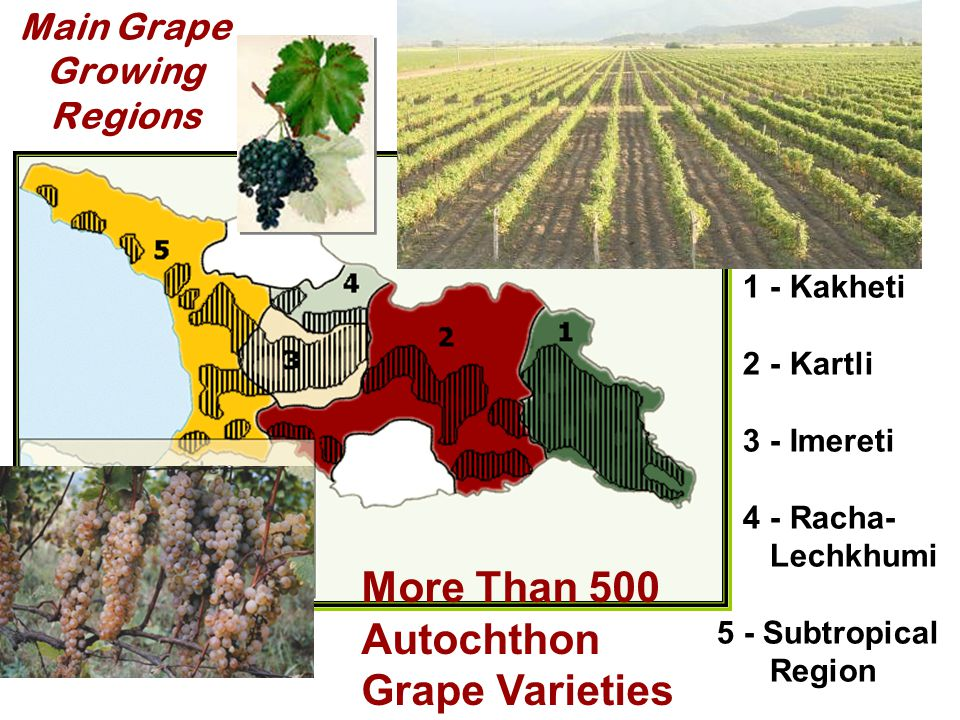 Main Grape Growing Regions