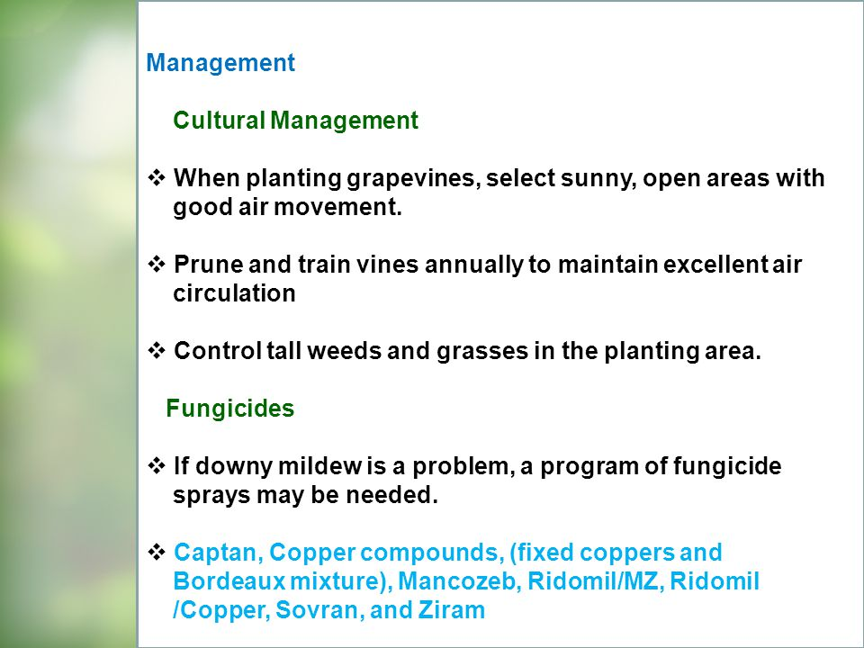 Management Cultural Management. When planting grapevines, select sunny, open areas with. good air movement.
