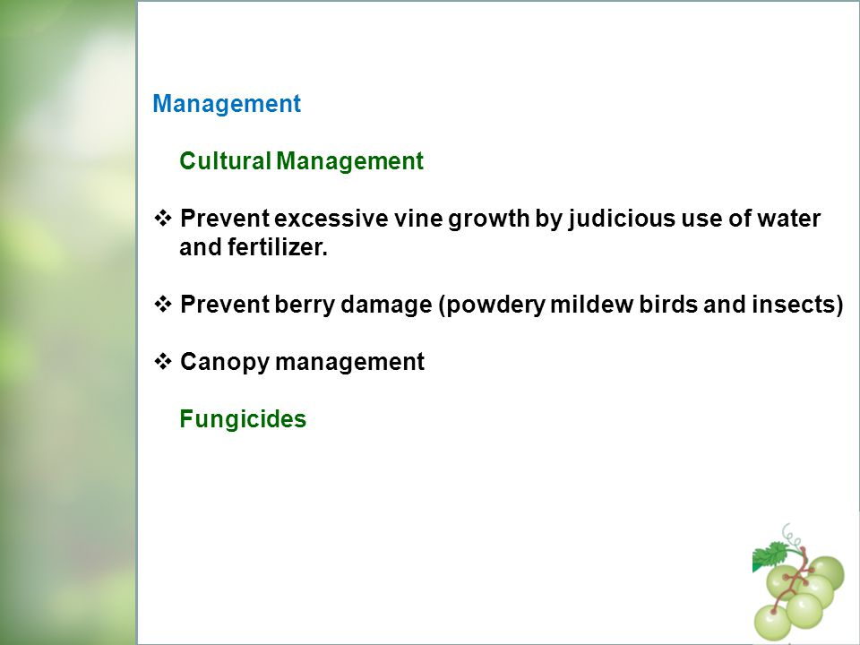 Management Cultural Management. Prevent excessive vine growth by judicious use of water. and fertilizer.