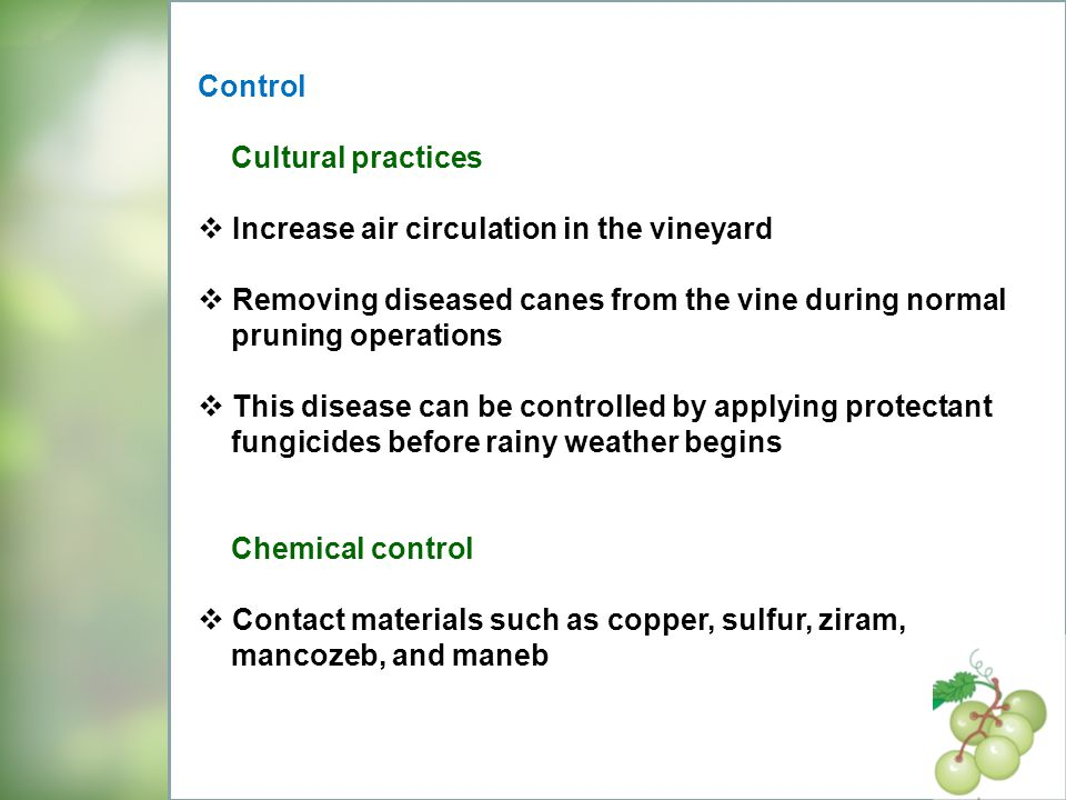Control Cultural practices. Increase air circulation in the vineyard. Removing diseased canes from the vine during normal.