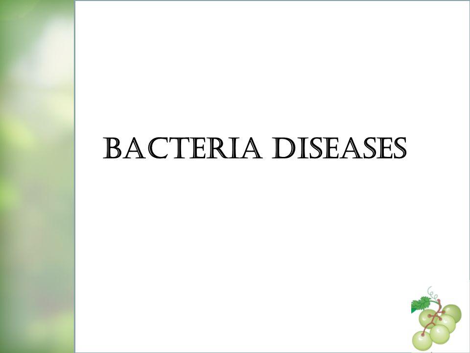 Bacteria diseases