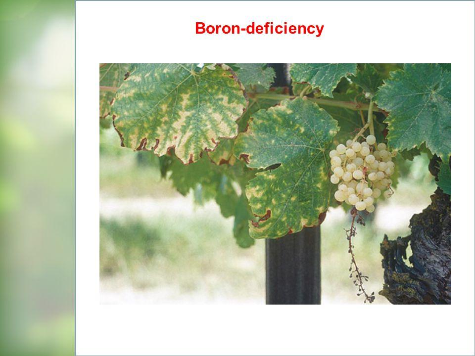 Boron-deficiency