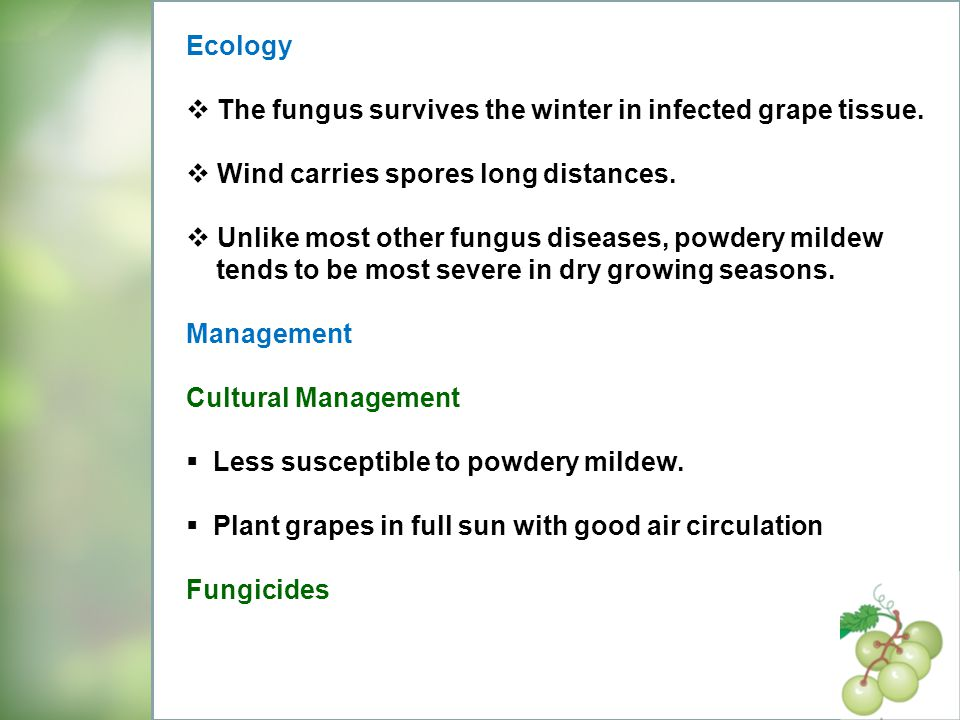 Ecology The fungus survives the winter in infected grape tissue. Wind carries spores long distances.