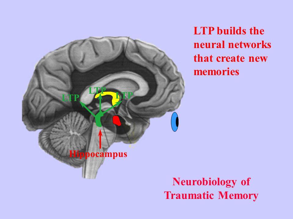 Neurobiology of Traumatic Memory