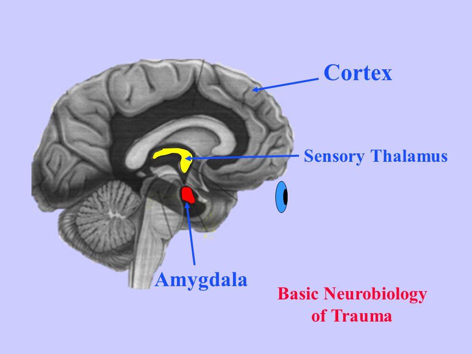 Basic Neurobiology of Trauma