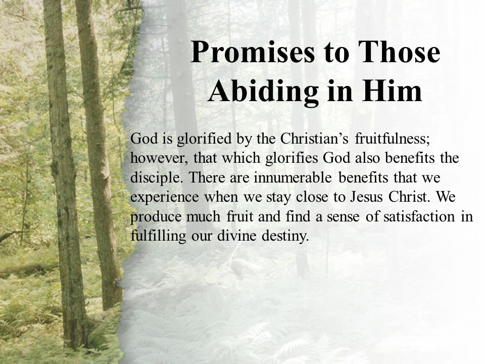 V. Promises to Those Abiding in Him