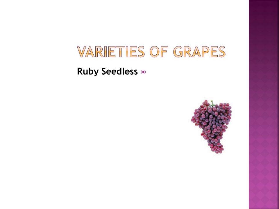 Varieties of Grapes Ruby Seedless