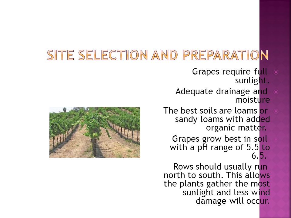 Site Selection and Preparation