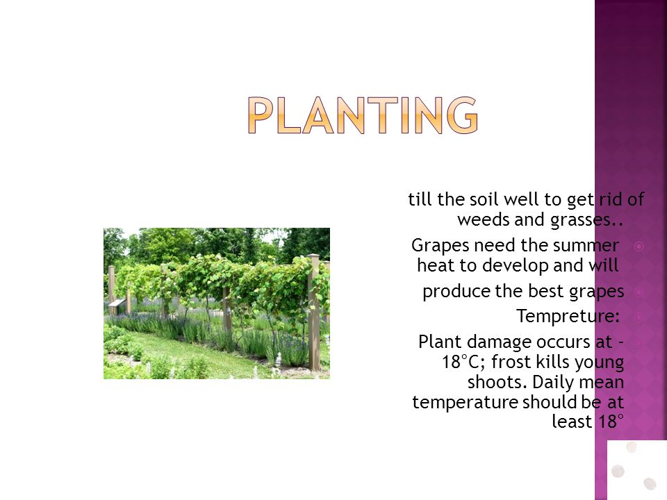 Planting till the soil well to get rid of weeds and grasses..