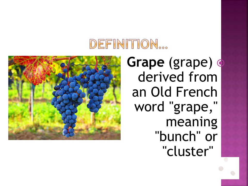 Definition… Grape (grape) derived from an Old French word grape, meaning bunch or cluster