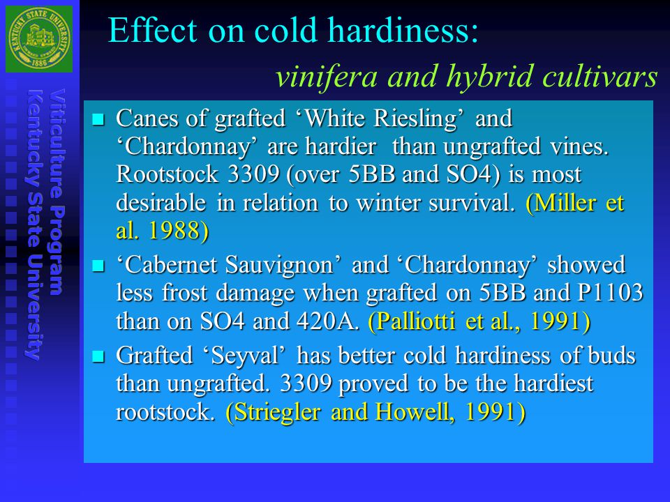 Effect on cold hardiness: vinifera and hybrid cultivars