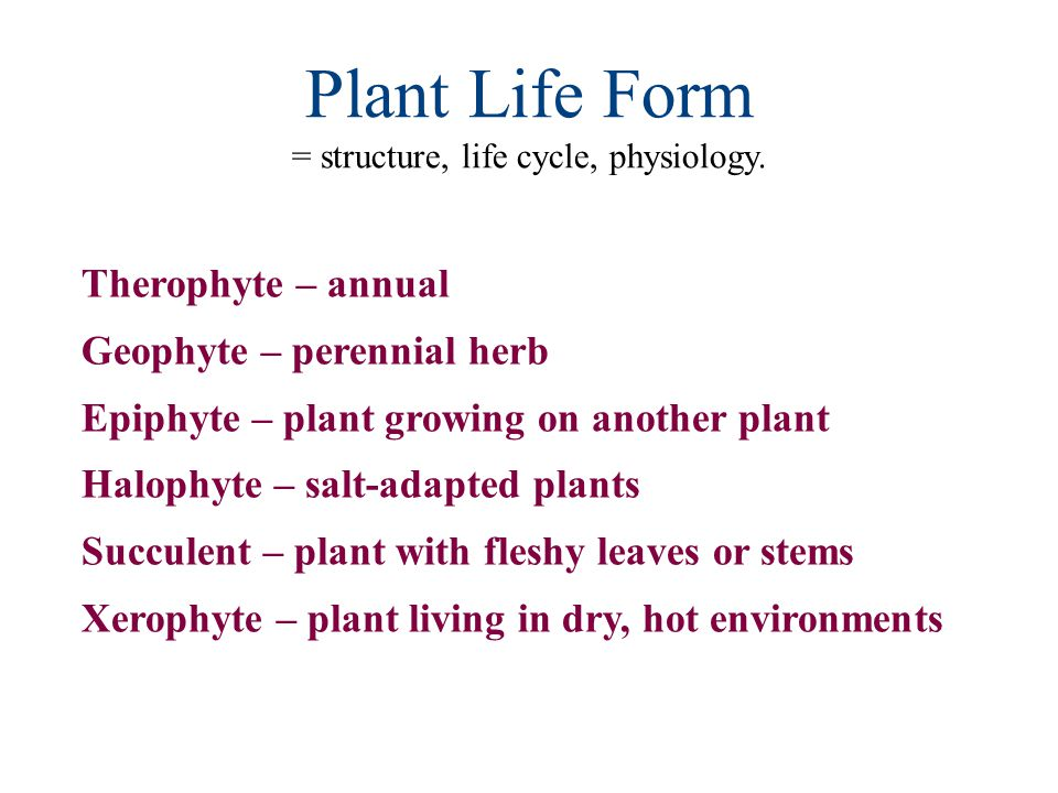 = structure, life cycle, physiology.